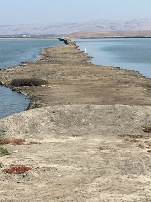 Levee trail on the San Francisco Bay