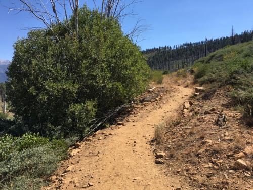 Double-track trail near Fallen Leaf Lake