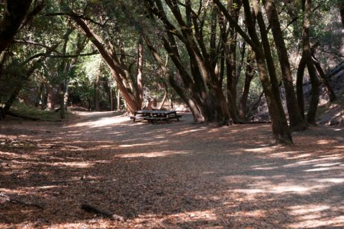 Lower Short Bunny Trail Loop