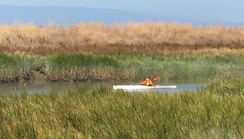 Kayaker on the Bay