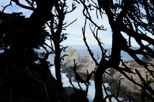 Point-Lobos29